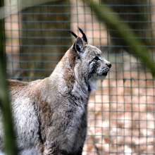 nms_tierpark_20120309_0001_21_