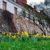 kloster_zehden_0014