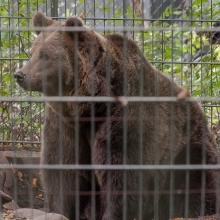 tag_3_aaalborg_zoo_nibe_limfjord_8962