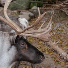 tag_3_aaalborg_zoo_nibe_limfjord_8967