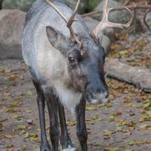 tag_3_aaalborg_zoo_nibe_limfjord_8969