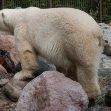 tag_3_aaalborg_zoo_nibe_limfjord_8975